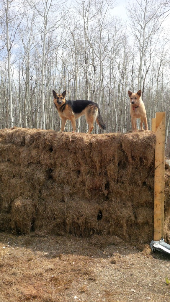 Hanna and Kensi playing King of the mountain